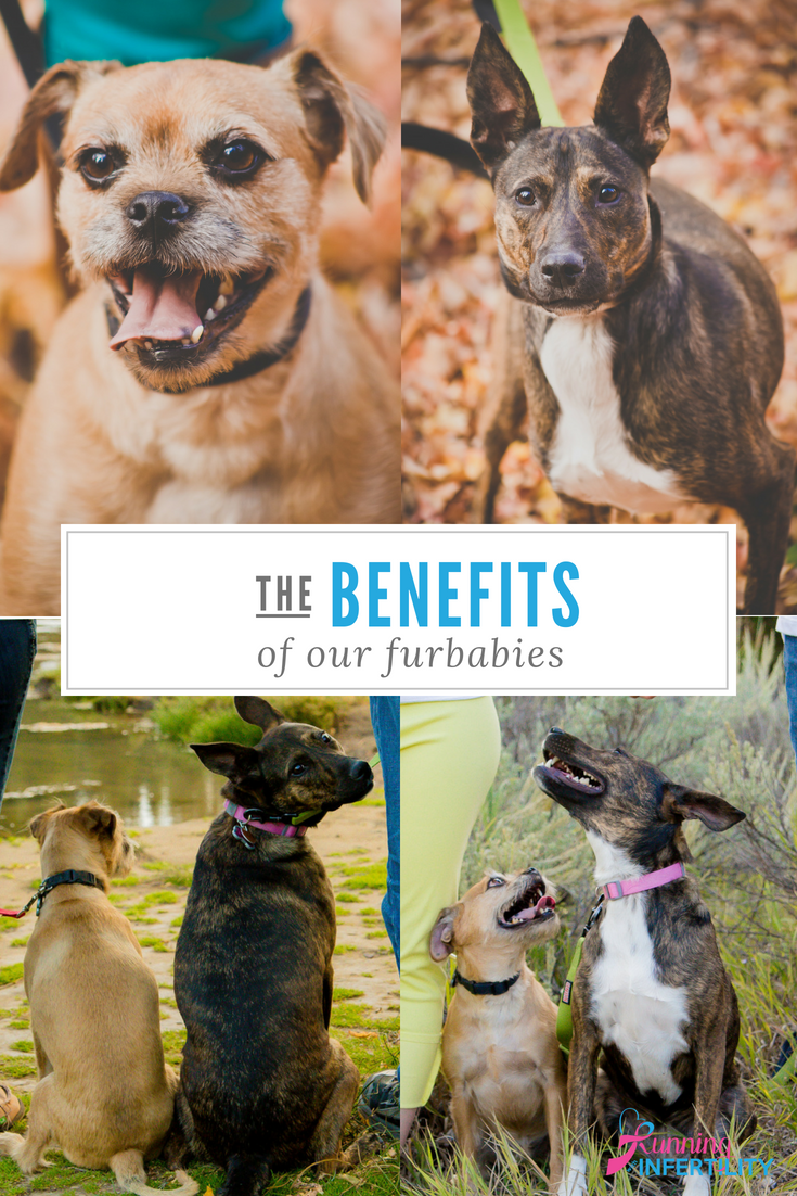 benefits of furbabies