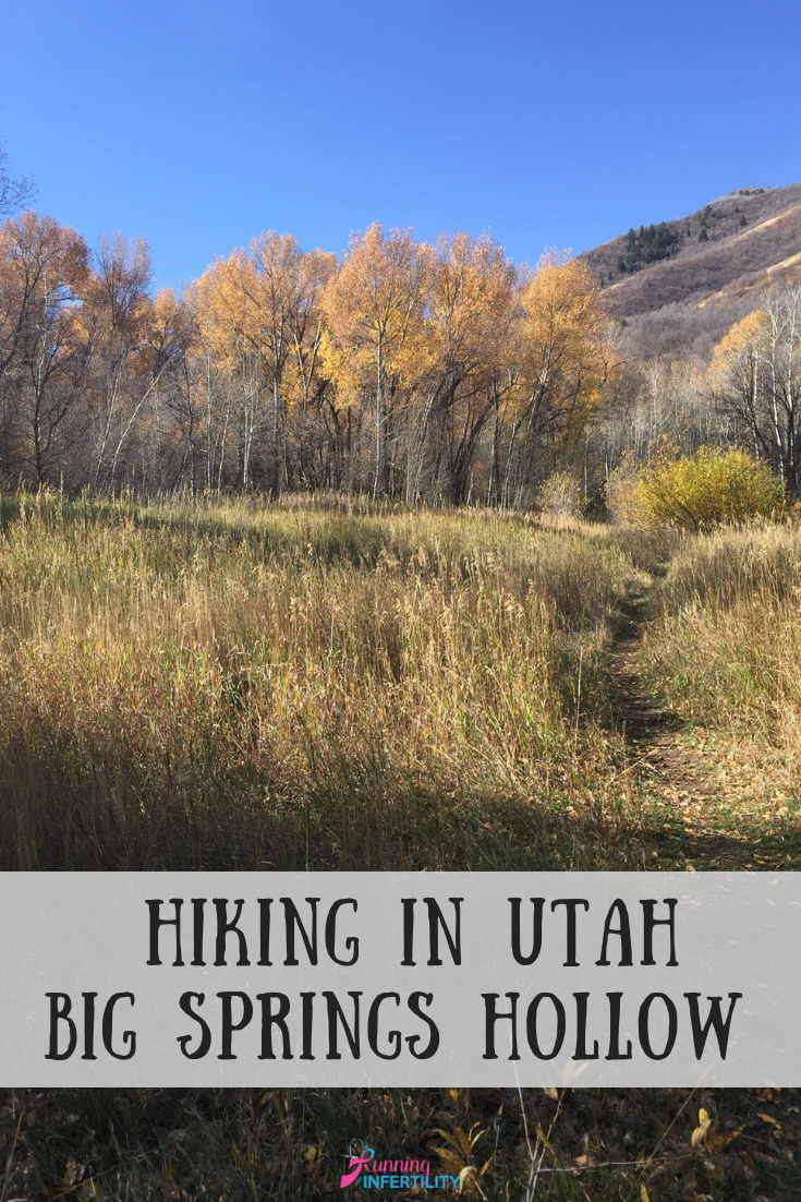 Big Springs Hollow Trail up South Fork in Provo Canyon in Utah